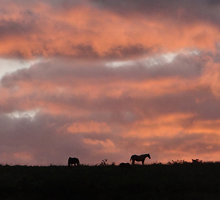 sunset view across with horses