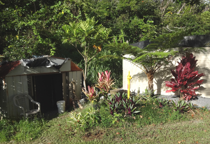 woodshed and breadfruit tree